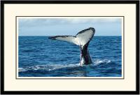 Humpback Tail 008  B x 900 Wide.jpg
