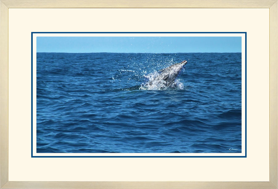 Dolphin 003  A  x 900 Wide.jpg