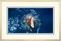 Dolphin 004  A  x 900 Wide.jpg