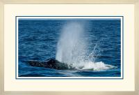 Humpback Blow 004 A  x 900 Wide.jpg