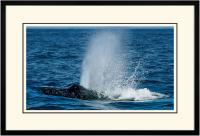 Humpback Blow 004 B  x 900 Wide.jpg