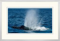 Humpback Blow 004 E  x 900 Wide.jpg