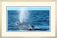 Humpback Blow 005  A  x 900 Wide.jpg