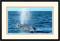 Humpback Blow 005  B  x 900 Wide.jpg