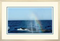 Humpback Blow 008  A  x 900 Wide.jpg