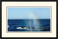 Humpback Blow 008  B  x 900 Wide.jpg