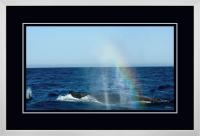 Humpback Blow 008  C  x 900 Wide.jpg