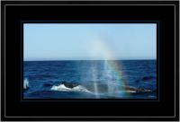 Humpback Blow 008  D  x 900 Wide.jpg