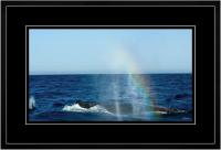 Humpback Blow 008  I  x 900 Wide.jpg